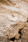 Ibexes, Hiking in the Negev Desert