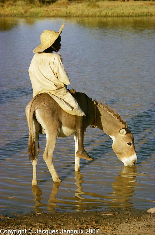 Boy on donkey drinking water in pool in Burkina Faso, Africa.