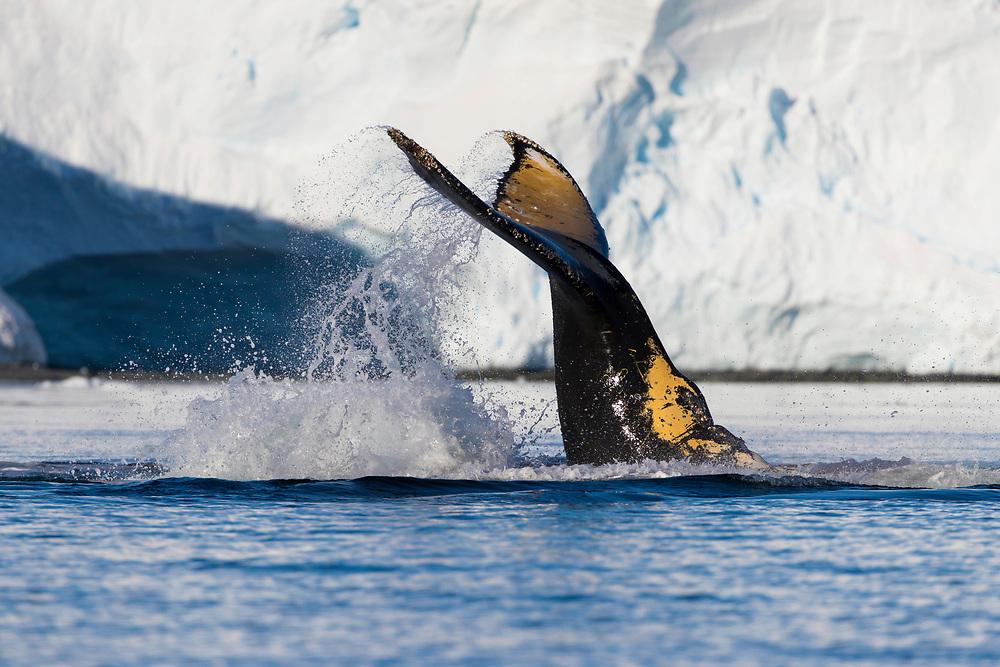 XXXXX during the Quark Expedition on Friday, Feb. 9, 2018 in Wilhelmina Bay, Antartica.