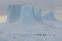 Adelie Penguins on an iceberg with towers and pinnacles on top.  Weddell Sea, Antarctica.