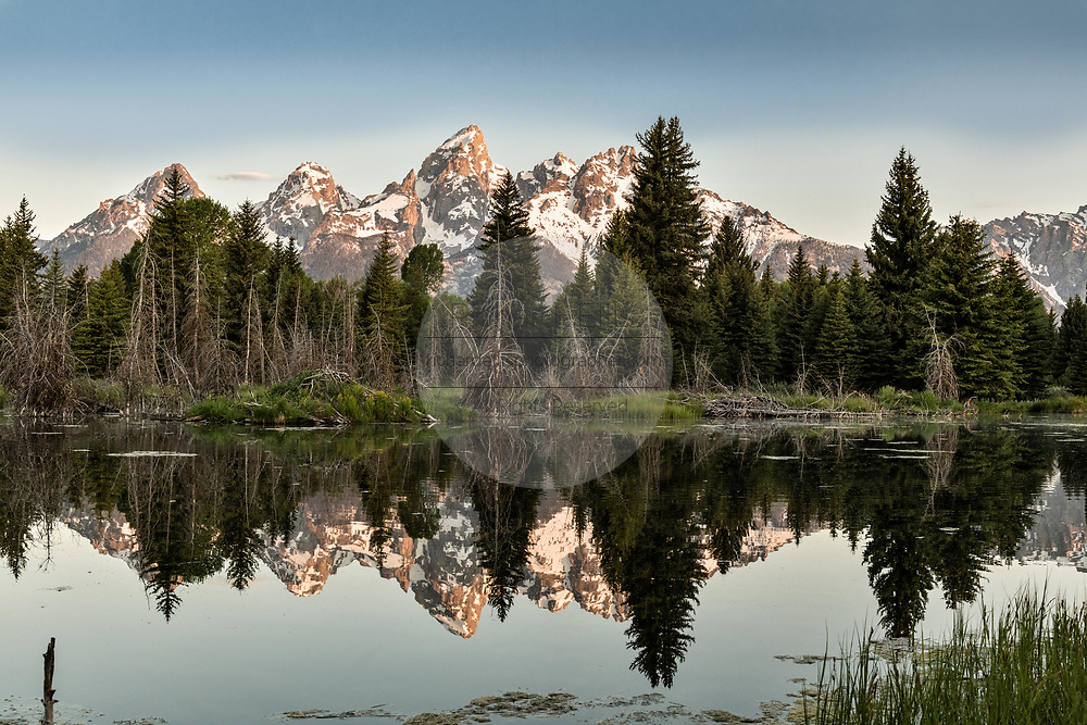 Mount Moran and the Grand Teton mountains reflected at sunrise on the Snake River at Schwabacher Landing in the Grand Teton National Park near Moose, Wyoming.