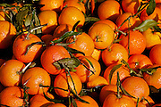 several mandarins in a heap at a market stall.