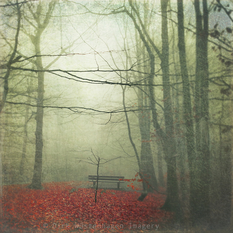 Misty December morning in a park. Texturized photograph<br />