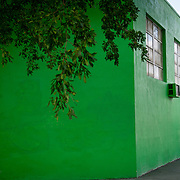 MIAMI, FLORIDA - FEBRUARY 8, 2016<br /> The green walls of a building in Miami's Little Haiti which is a neighborhood formerly known as Lemon City.<br /> (Photo by Angel Valentin)