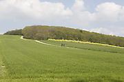 Hikers are walking on a green field near Pocklington, Yorkshire, England, United Kingdom.