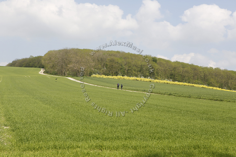 Hikers are walking on a green field near Pocklington, Yorkshire, England, United Kingdom.