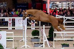 036, Risotto vd Zwartbleshoeve<br /> BWP Hengstenkeuring -  Lier 2020<br /> © Hippo Foto - Dirk Caremans<br />  17/01/2020