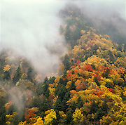 The higher elevations of the smokies are often enveloped in mist and fog, leading to dramatic autumn scenes. Great Smoky Mountains National Park, Tennessee, USA.