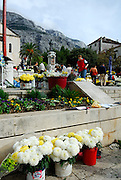 Chrysanthemums for sale for All Saints Day and All Souls Day. Town square (Kacicev trg). Makarska, Croatia