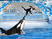 Flying with Shamu the whale