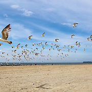 Personal photo of mine of swarming gulls on a Lake Erie beach at Maumee Bay State Park. (Oregon, Ohio)