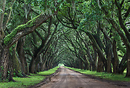 Road lined with Live Oak Trees in St James Parrish, Louisiana.