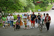 Rorschach (second from right)) leads a group up a street in Alamo Heights during the 9th Annual Pooch Parade, April 29, 2007.  Photo copyright 2007 Lance Cheung
