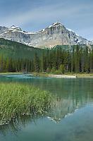 Epaulette Mountain and Mistaya River, Banff National Park Alberta Canada