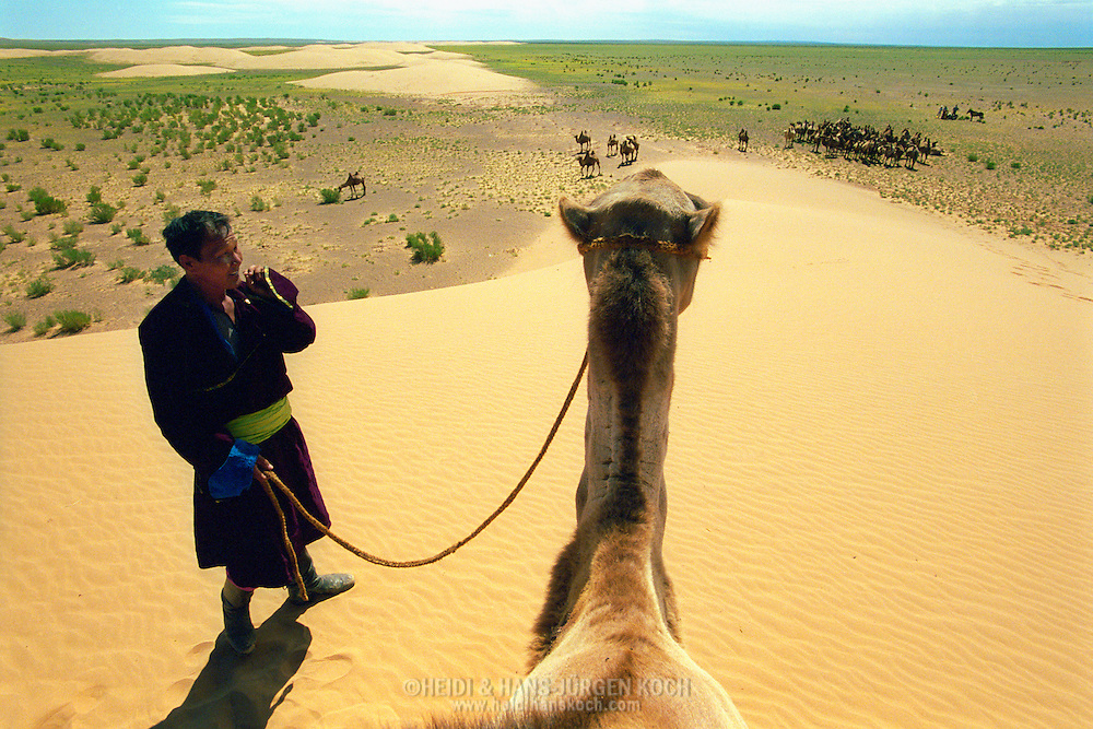 Mongolei, MNG, 2003: Kamel (Camelus bactrianus). Nomade mit seinem Kamel auf dem Gipfel einer Sanddüne blickt auf die südliche Gobi. Am Fuße der Düne steht eine Kamelherde. | Mongolia, MNG, 2003: Camel, Camelus bactrianus, nomade and its camel on a hilltop of a sand dune overlooking the Gobi, at the foot of the dune its camel herd is standing, South Gobi. |