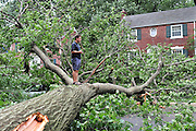 A man stands on a downed tree in the aftermath of Hurricane Irene in Takoma Park, Maryland on August 28, 2011. The Category 1 storm left half a million people without power in the D.C. area.  UPI/Kevin Dietsch