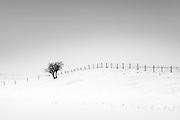 Minimal shot of a snow covered landscape with a fence and a small bush.