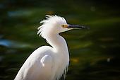 Birds of Tucson
