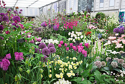 Avon Bulbs Display in the Grand Marquee. Gold medal winner. RHS Chelsea Flower Show 2015