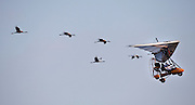 Whooping Cranes 2009 Photo by Tom Lynn