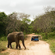 Elephant and Tutuk meet each other on the road in the region of Girithale in the middle of the ancient Sinhala empire.