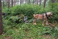 Paardenkracht in het boslandschap De Winning 2012