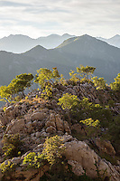 Trees atop a rocky peak on a late summer day high above Kotor, Montenegro <br /> (Kotor, Montenegro - September 2013)