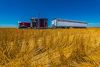 An 18 wheeler used to transport grain from the fields, during the wheat harvest,  Schields & Sons Farming, Goodland, Kansas USA.