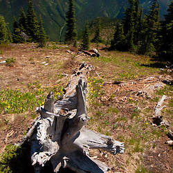 Fallen Tree on Desolation Peak, North Cascades National Park, Washington, US