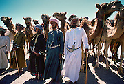 Camel Drovers with their camels, Oman