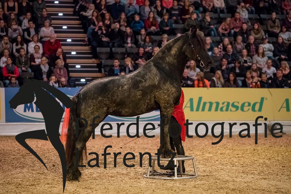 Heidi und Abeltje und Kuschel<br /> Oldenburg - AGRAVIS-Cup 2018<br /> Freiheitsdressur<br /> Gala-Abend<br /> 03. November 2018<br /> © www.sportfotos-lafrentz.de/Stefan Lafrentz