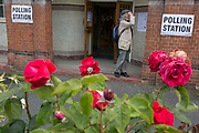 Seen through (the Labour Party symbol) red roses, an elderly voter reads an information poster at the polling station on the morning of the UK 2017 general elections outside St. Saviour's Parish Hall in Herne Hill, Lambeth, on 8th June 2017, in London, England.