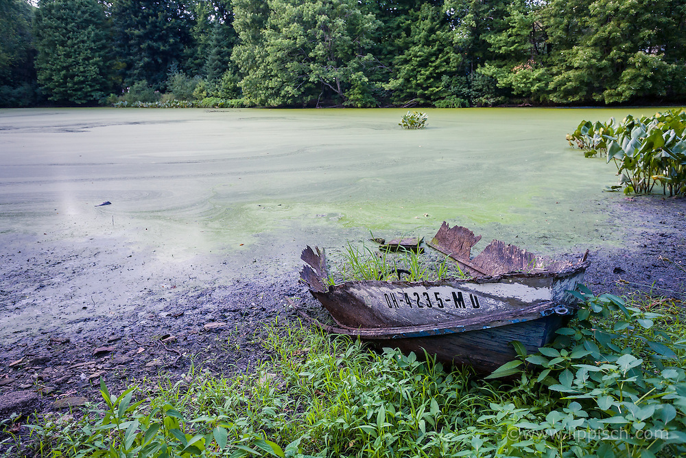 An old wooden boat sits rotting away in a lush pond.