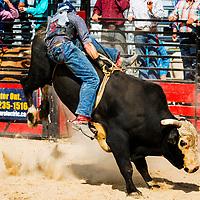Exeter RAM Rodeo Exeter Ontario Canada Aug 2017. Bull riding