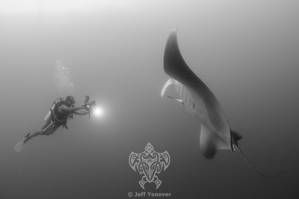 Diver photographs a Pelagic Manta<br /> <br /> Shot in Raja Ampat Marine Protected Area West Papua Province, Indonesia
