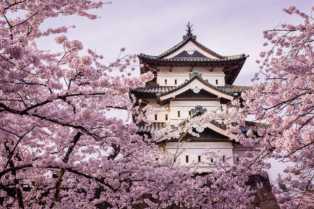 Hirosaki Castle peeks from a mix of branches full with cherry blossoms