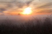 On Fire.<br /> Sunrise creates a fire- like effect over the fog laden marsh.<br /> Savannah, GA