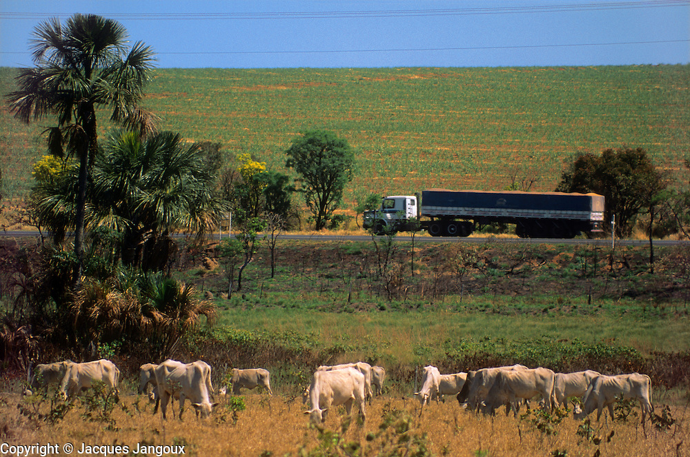 Four components of Brazilian economy: cattle, truck transportation, monocultures (young sugar cane plants in background) and energy tranmisison (power lines), Minas Gerais, Brazil.