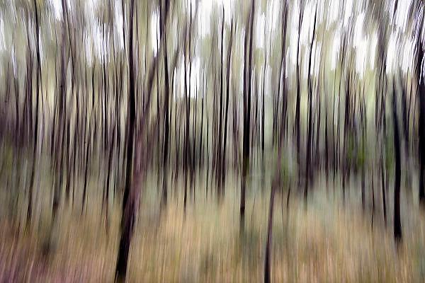 Nederland, Nijmegen, 8-9-2013Door lange sluitertijd en bewogen camera abstracte bomen, bos.Foto: Flip Franssen/Hollandse Hoogte