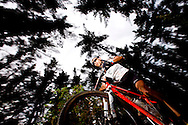 Oak Valley ( Elgin / Grabouw ), SOUTH AFRICA - A rider makes his way through the single track and wooded forests at High Rising during stage six , 6 , of the Absa Cape Epic Mountain Bike Stage Race in Oak Valley ( Elgin / Grabouw ) on the 27 March 2009 in the Western Cape, South Africa..Photo by Karin Schermbrucker /SPORTZPICS