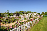 Roses, Three Ponds Farm, 939 Scuttle Hole Rd, Water Mill, Long Island, New York