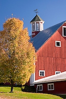 Classic red new England Barn with maple tree in autumn, Vermont USA beautiful