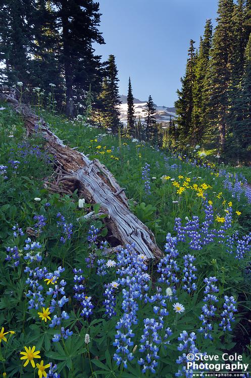 Death and Life - Mount Rainier National Park