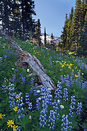 Death and Life - Mount Rainier National Park