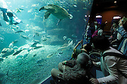 people looking at various type of fish in large aquarium with scuba diver
