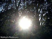 Sun peaking out through a bunch of trees in the background.