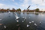 France. Paris. 1st district. the Tuileries garden in autumn / le jardin des tuileries en automne