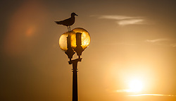 THEMENBILD - URLAUB IN KROATIEN, eine Möwe sitzt auf einer Laterne, bei Sonnenuntergang, aufgenommen am 03.07.2014 in Porec, Kroatien // a seagull sitting on a lantern at sunset at Porec, Croatia on 2014/07/03. EXPA Pictures © 2014, PhotoCredit: EXPA/ JFK