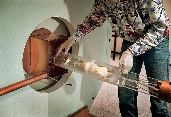Nederland, Nijmegen, 23-6-2005..Onderzoek bij een rat in het centraal dierenlab van de Radboud Universiteit, RU, voorheen KUN. In het kleine MRI apparaat wordt een scan gemaakt om stofwisseling te meten. Het dier is onder narcose gebracht en wordt in dit onderzoek niet extra belast. Medische wetenschap...Foto: Flip Franssen