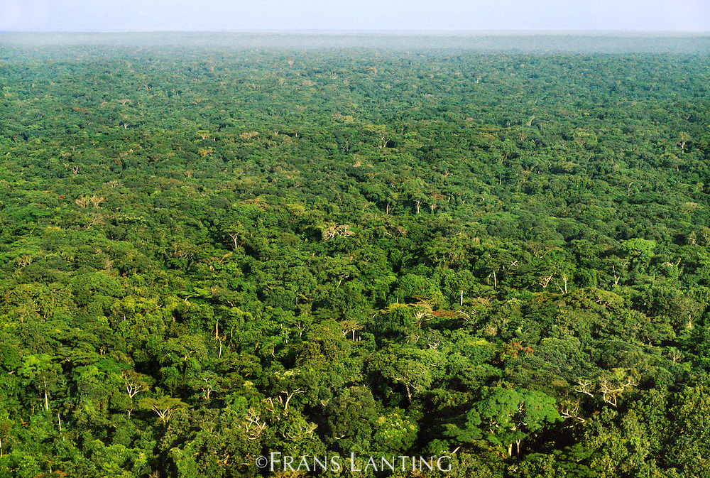 Tropical rainforest (aerial), Congo (DRC)